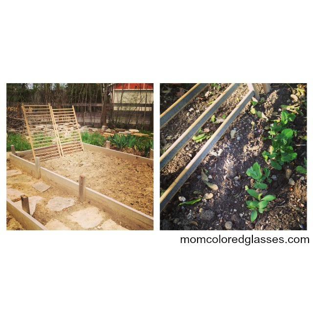 gardening3